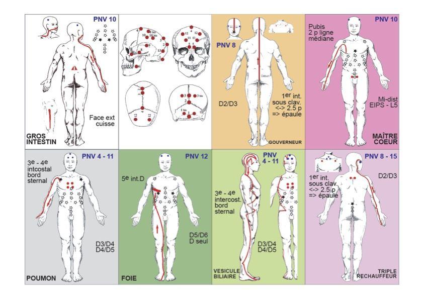 méridiens kinésiologie